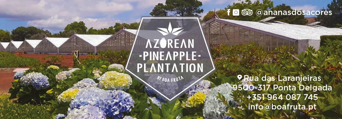 Azorean Pineapple Plantation by Boa Fruta